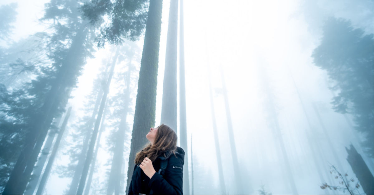 Lady in foggy forest looking up at tree tops