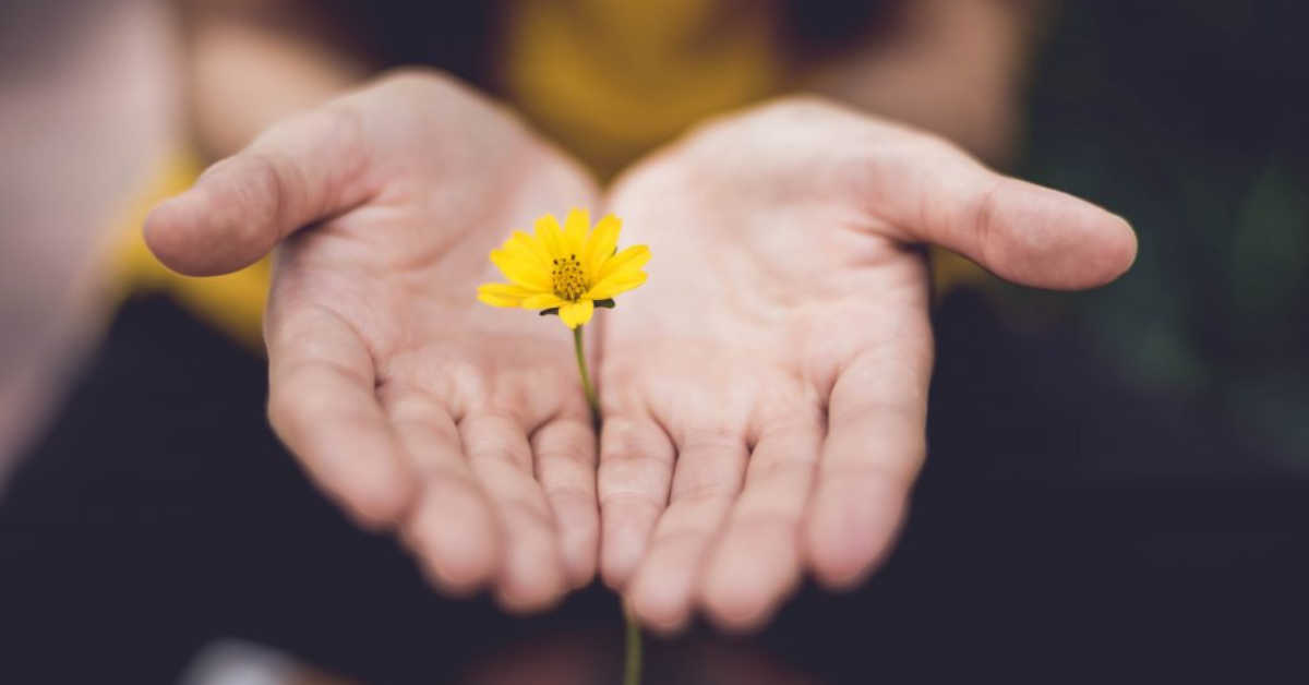 two hands palms up extending small yellow flower
