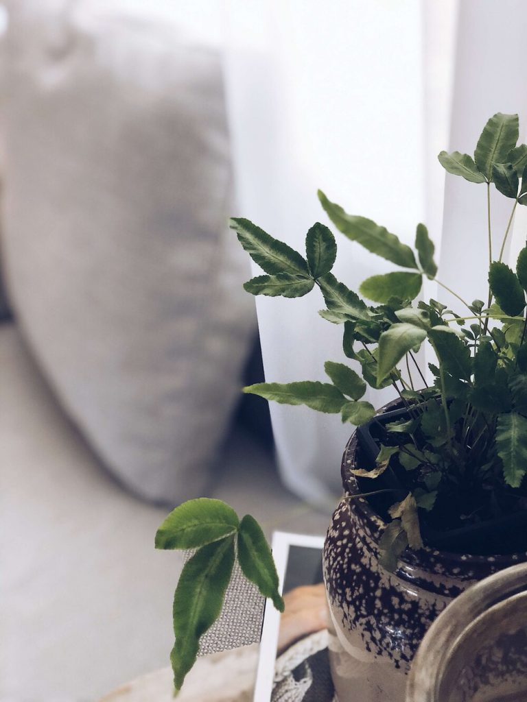 photo of an unknown houseplant