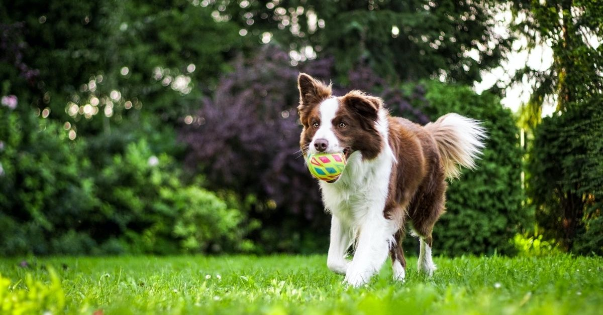dog running with ball in its mouth