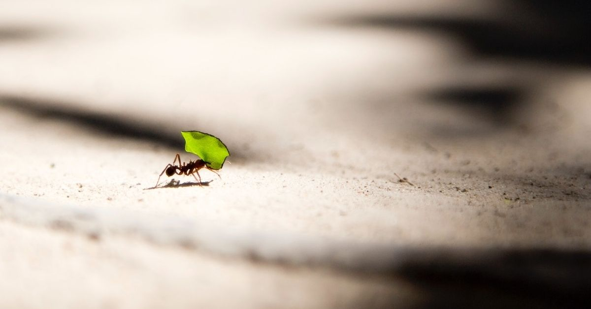 ant carrying a green leaf